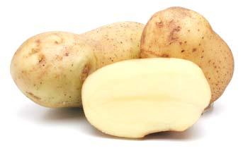 kartoffel sieglinde dark