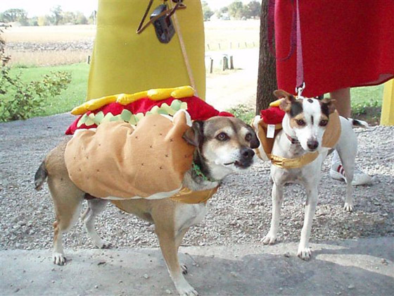 Pictures Of Dogs As Hot Dogs